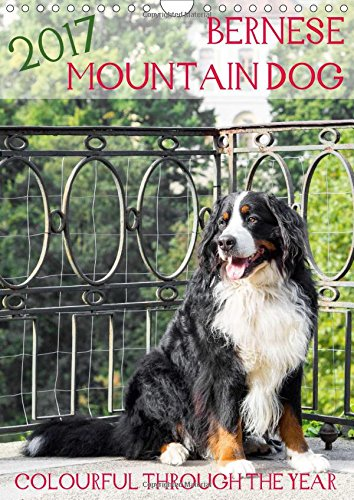 Bernese Mountain Dog - colourful through the year (Wall Calendar 2017 DIN A4 Portrait): Portraits of a bernese mountain dog (Monthly calendar, 14 pages )