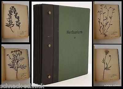Top Herbarium 1950 Botanik Arznei über 90 S. Kräuter Apotheker Biologie Pflanzen