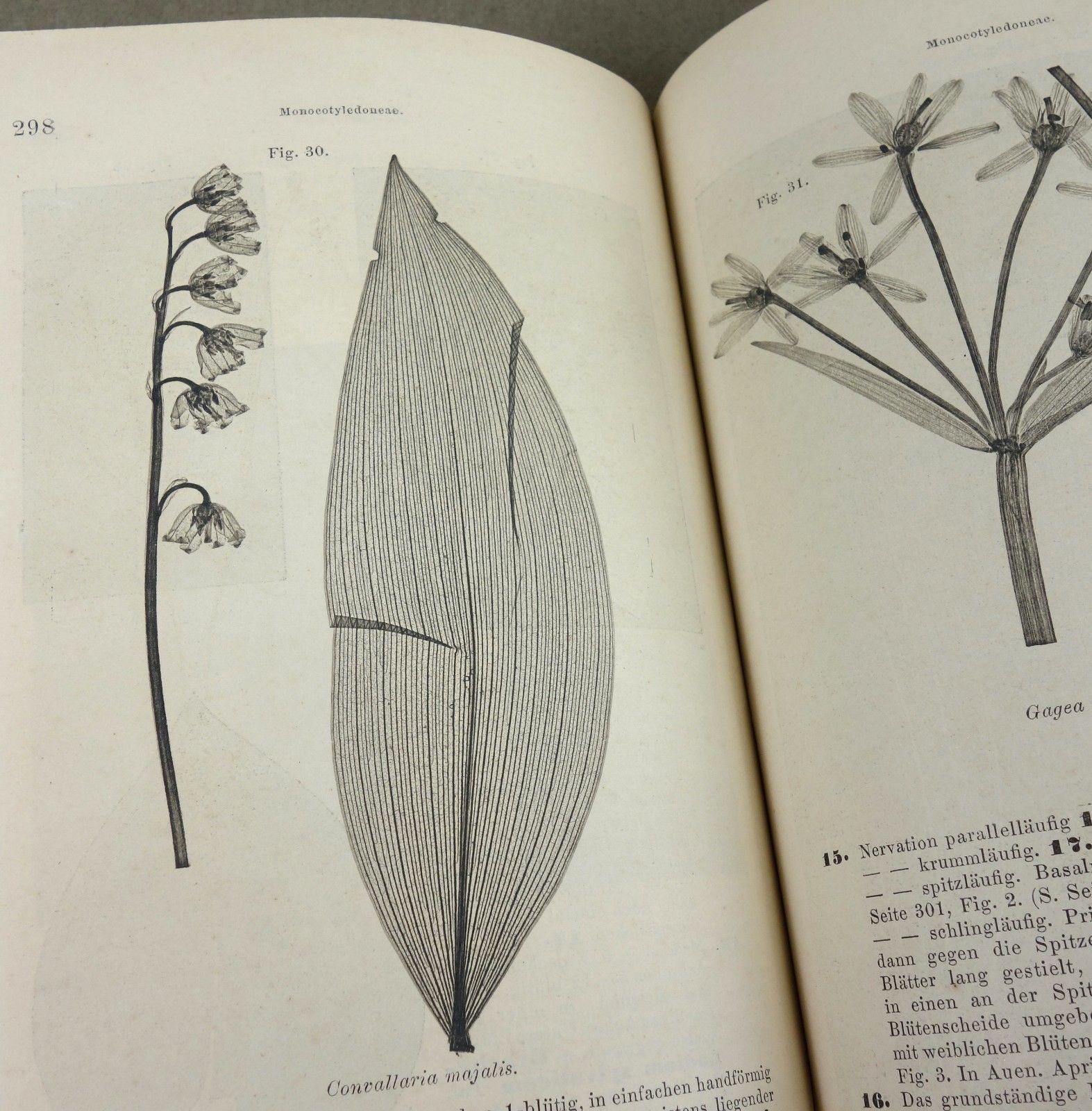 1862 - BOTANIK - Medizinalpflanzen - PHARMAZIE Kräuterbuch Gift Giftpflanzen RAR