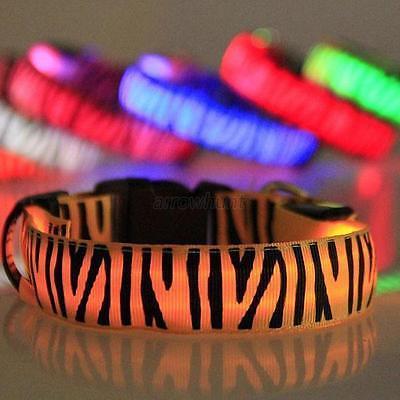 Cute Novel Safety Pets Dogs Zebra LED-Halsband Lighted up Nylon LED Collar S-XL