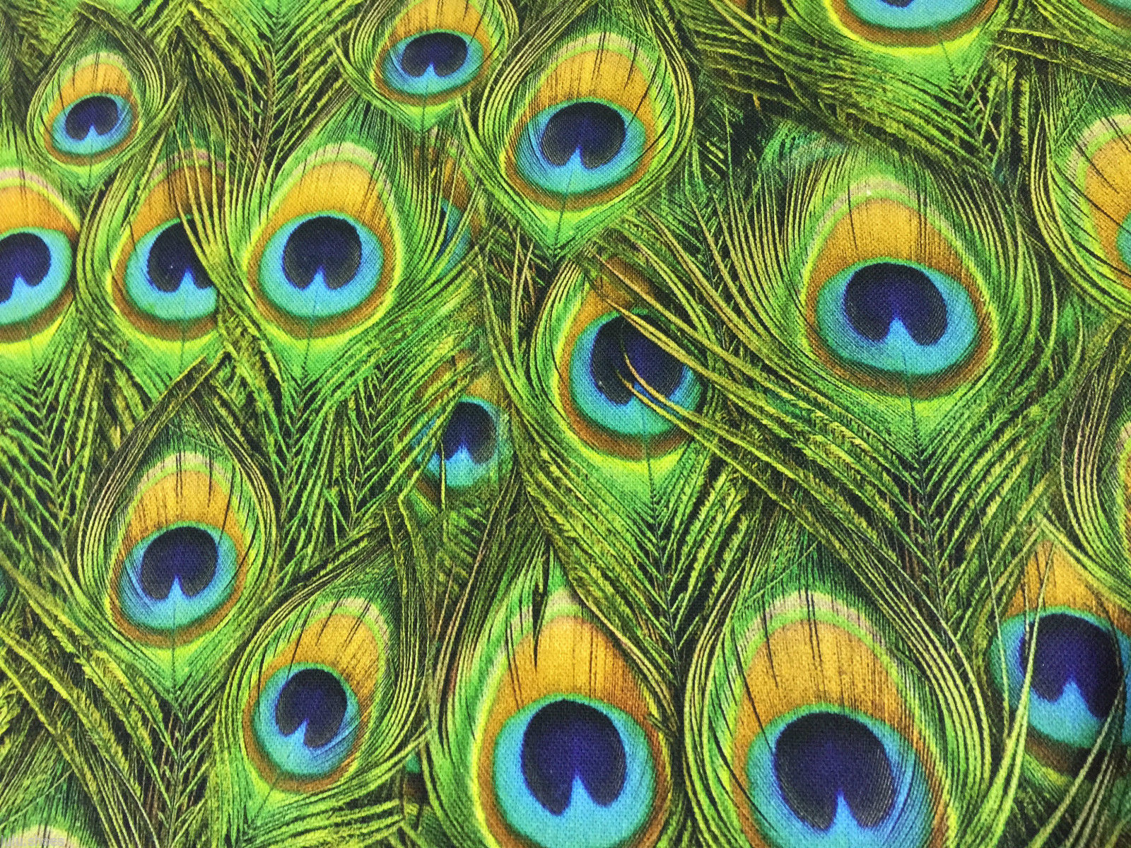 PEACOCK FEATHERS Curtain Upholstery Cotton Fabric Material - 140cm wide GREEN