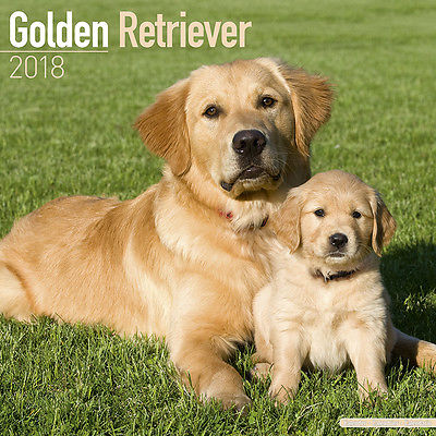 Kalender 2018 Golden Retriever Retriver Hund Dog Wandkalender