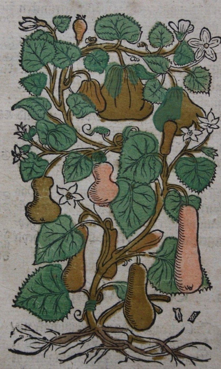 ADAM LONICER,KREUTTERBUCH,ALTKOLORIERTE HOLZSCHNITTE,EGENOLFFS,1564,RAR