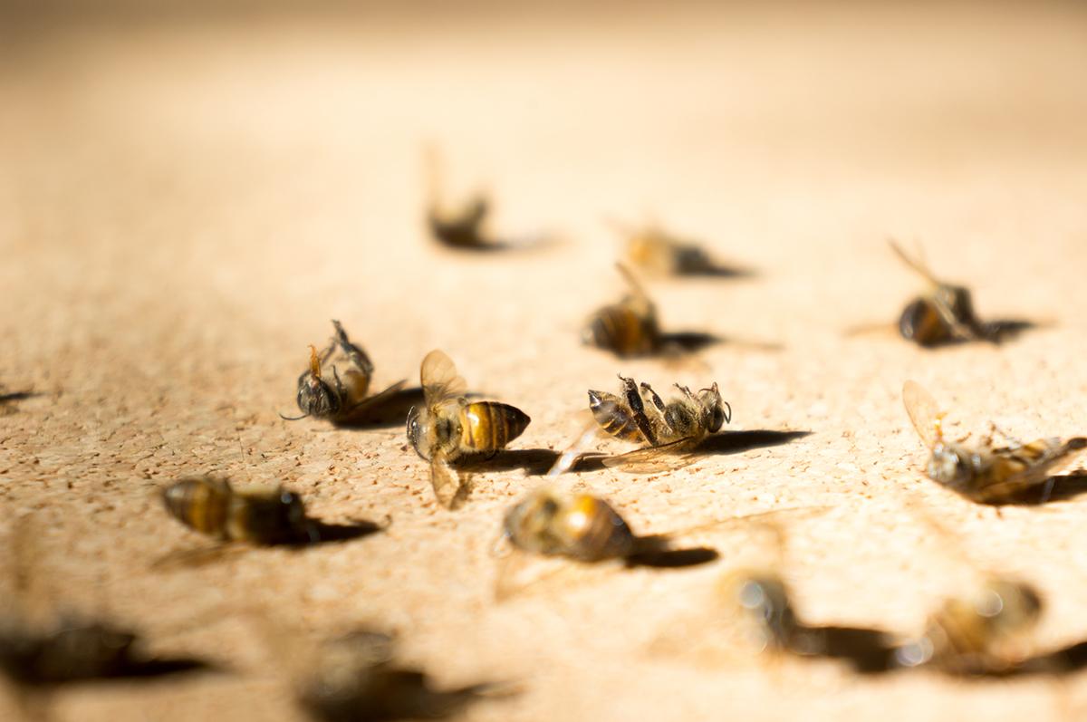 Frankreich Verbietet Als Erstes Alle Pestizide Die Bienen Tödlich
