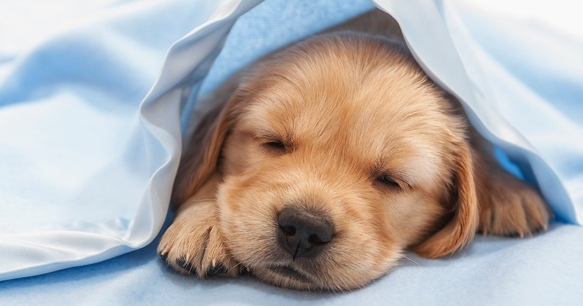 Laut Psychologin träumen Hunde über die Menschen, die sie lieben