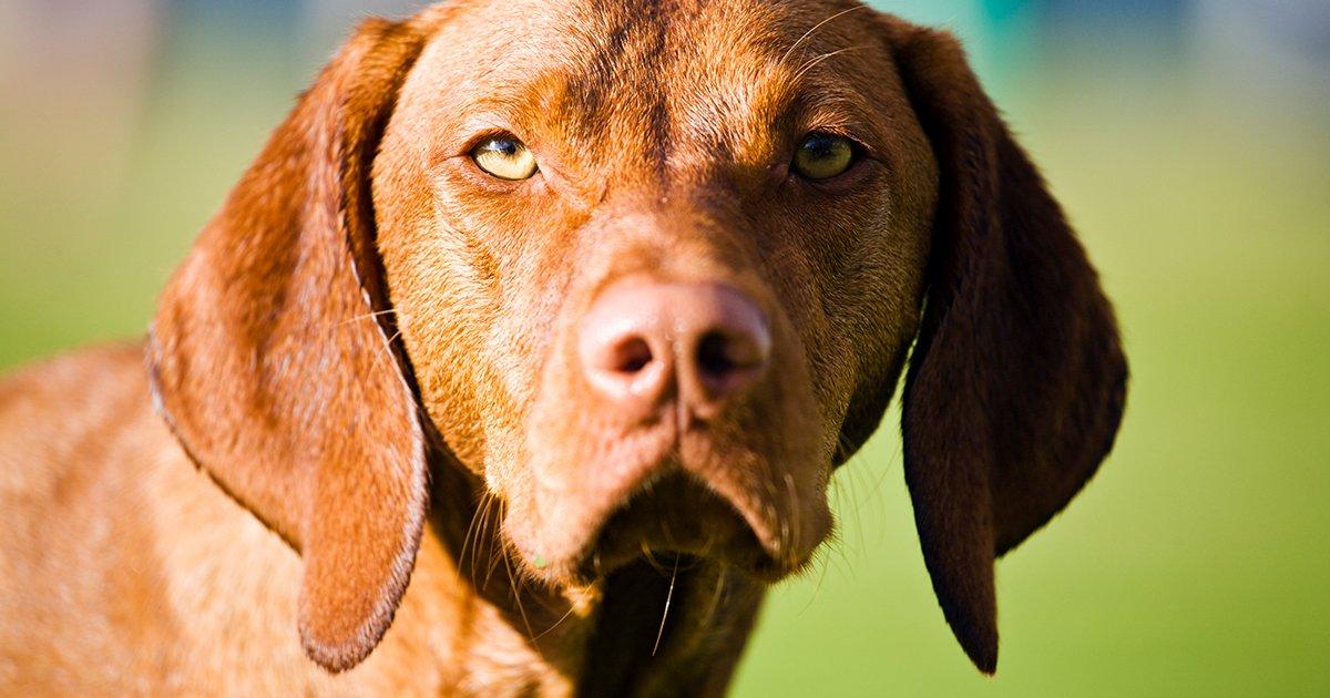 Die Wissenschaft erklärt uns, woran Hunde eine böse Person erkennen